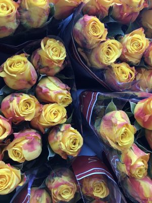 mixed colour roses
